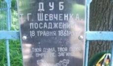 Шевченковский дуб